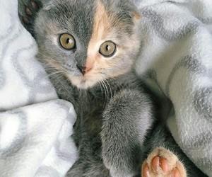 love, eye eyes, and animals animal image