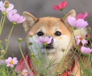 dog, flowers, and inu image