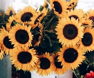 flowers, summer, and sunflowers image