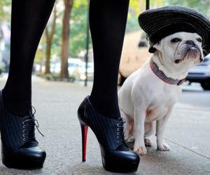 dog, shoes, and heels image