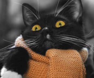 cat, colorpopeffects, and scarf image