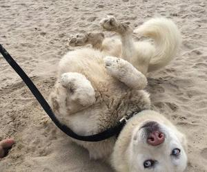 aww, beach, and dogs image