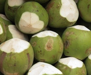coconut, theme, and green image
