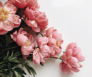 flowers and pink image