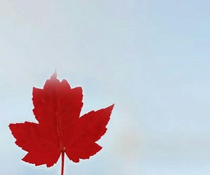 canada, maple leaf, and goblin image