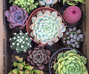 cactus, plants, and pretty image