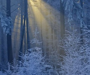 forest, winter, and sunset image