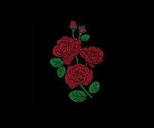 rose and header image