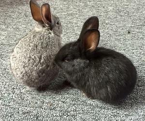 baby, bunny, and bun image