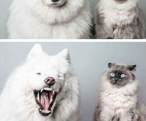 dog, cat, and animals image