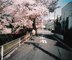 japan, sakura, and street image