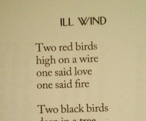 birds, poetry, and quotes image