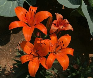 orange and flowers image