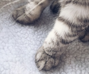 paws, cat, and gray image