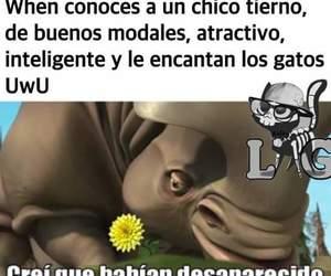 chico, Gatos, and memes en español image