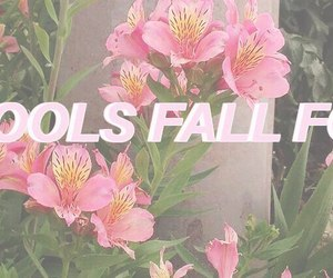 flowers, layout, and pink image