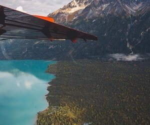 beauty, flight, and forest image