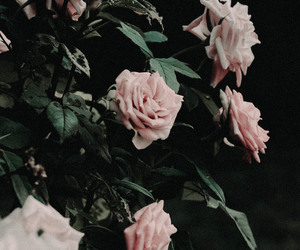 background, beauty, and roses image