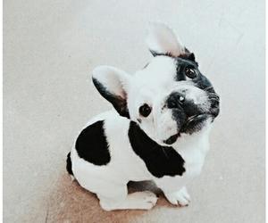 aesthetic, bulldog, and tumblr image