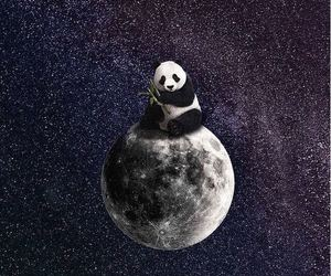 moon and panda image