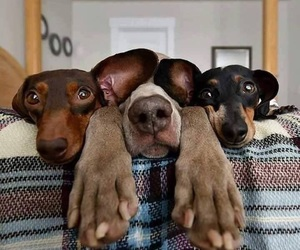 animals, funny, and dogs image