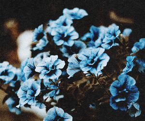 blue, flowers, and header image