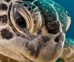 animals and turtles image
