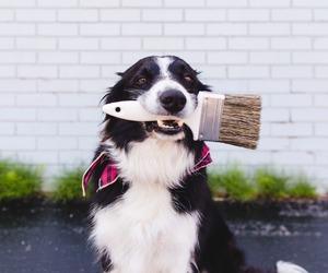 border collie and dog image