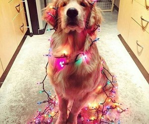 fairy lights, cozy, and dog image