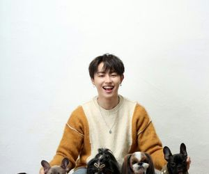 bbc, dogs, and idol image