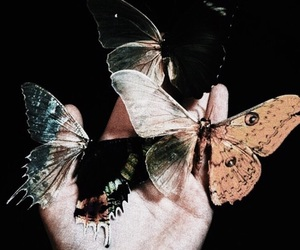 butterfly, grunge, and theme image