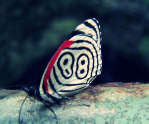 borboleta, butterfly, and 88 image