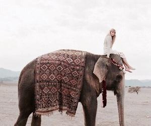 elephant, animal, and travel image