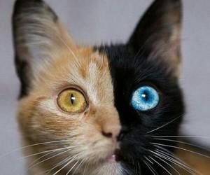 cat and half image