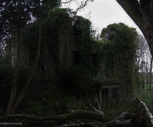 dark, fantasy, and overgrown image