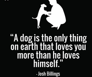 dog, I Love You, and dogs image