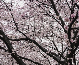 asia, nature, and pink image