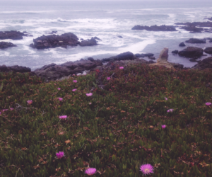 ocean, photography, and nature image
