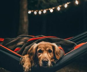 dog, hammock, and nature image