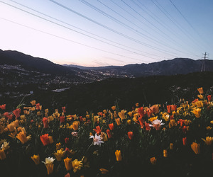 colors, flowers, and mountains image