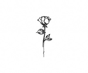 alternative, rose, and flowers image