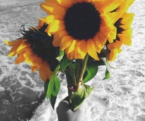 sunflowers, popping, and colorpop image