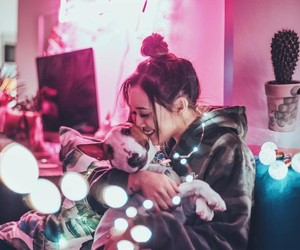 lights, dog, and cute image