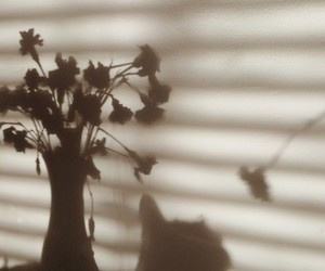 flowers, light, and morning image