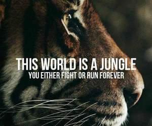 animals, inspiration, and jungle image