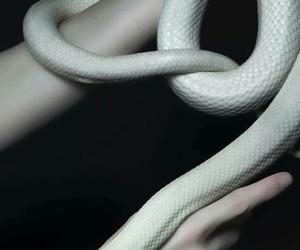 black, snake, and white image