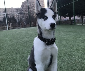 boy, puppy, and laika image