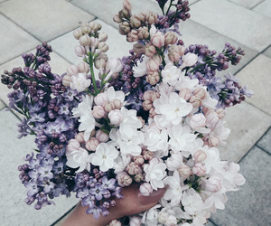 flowers, beauty, and lilac image