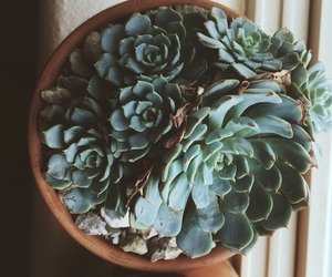 green, plant, and succulent image