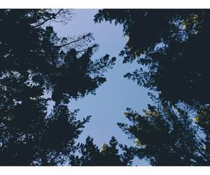 cielo, forest, and bosque image